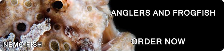 Anglers & Frogfish